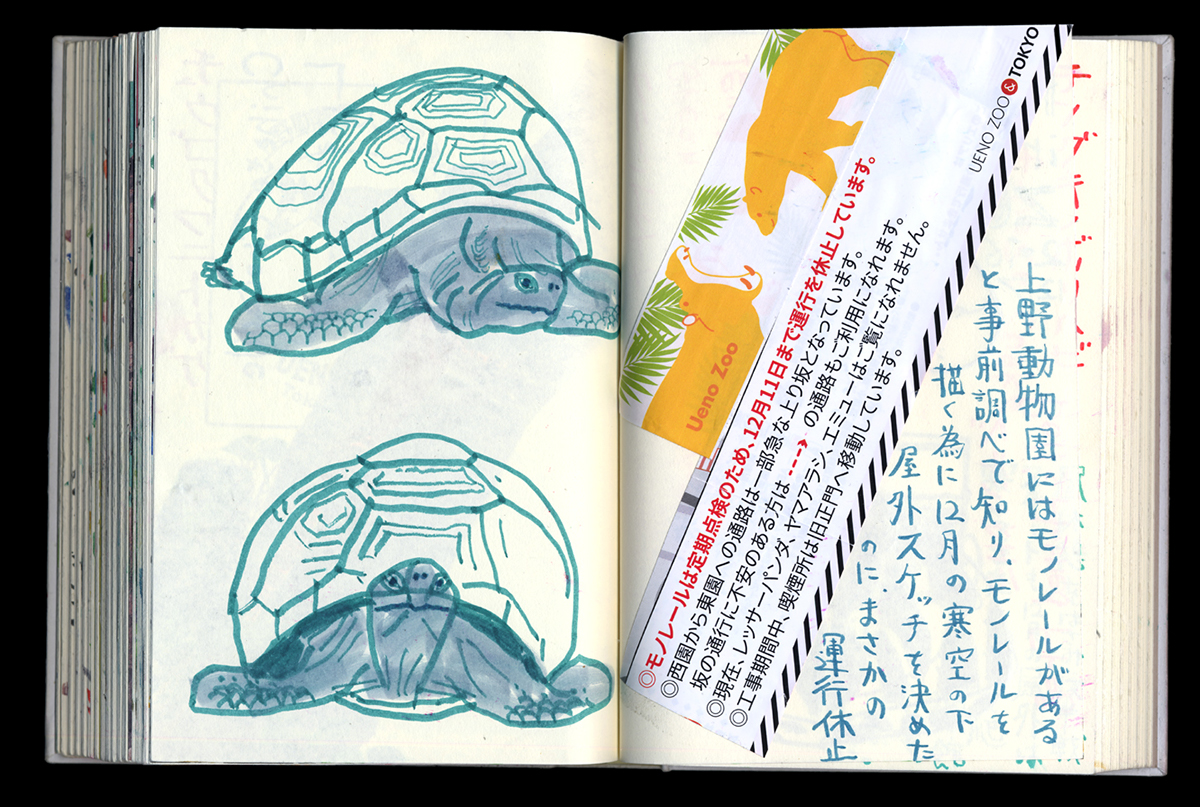 drawing at the zoo, turtles