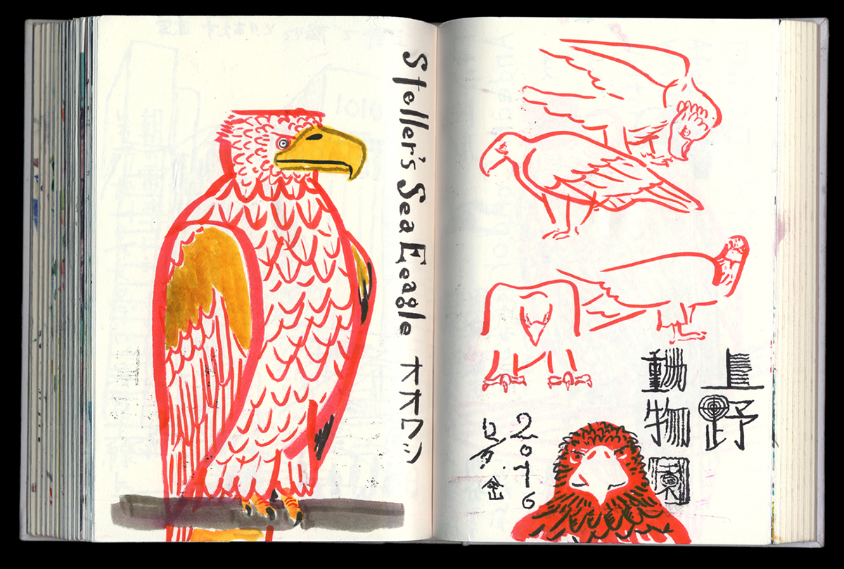 sketchbook, zoo, birds