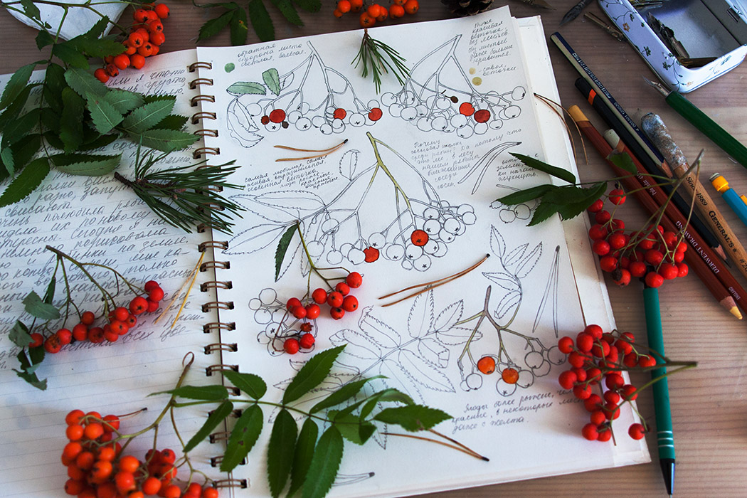 leaves, berries, creative workspace, journaling in the woods