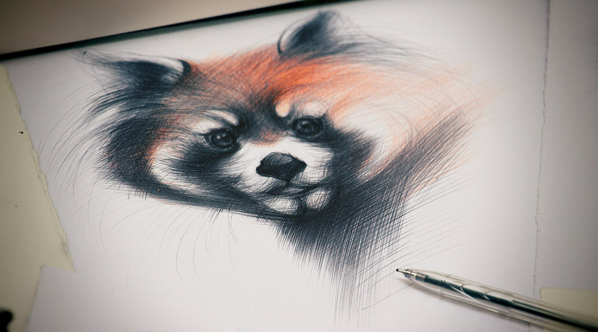 Ballpoint Pen Racoon Drawing
