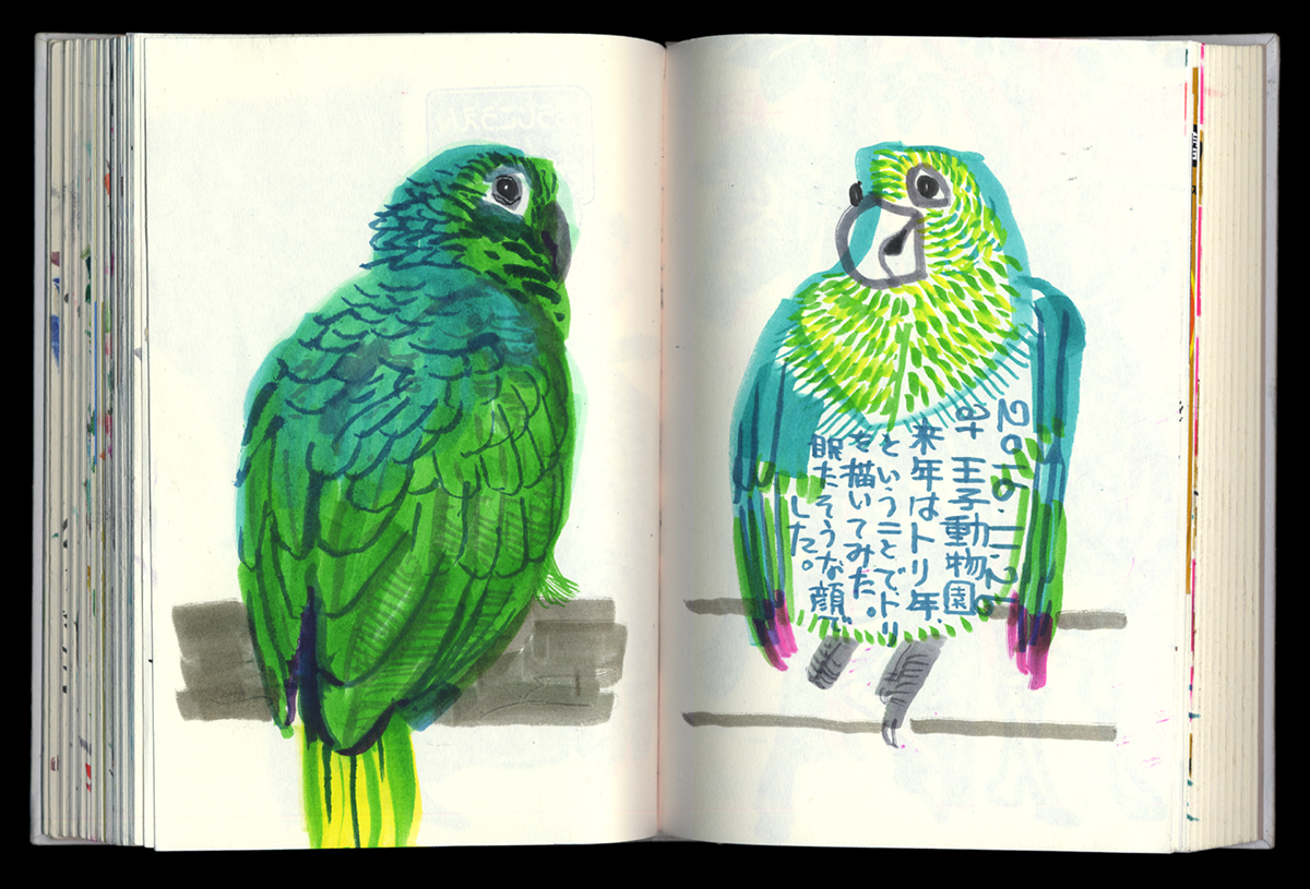 live sketching at the zoo, birds
