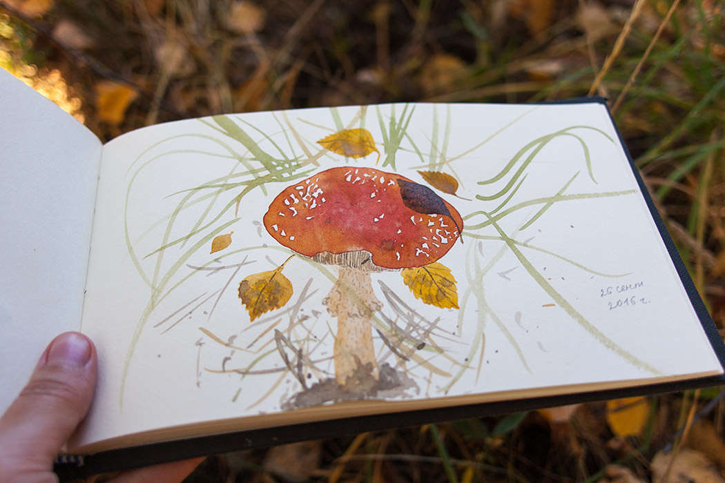 mushrooms, watercolors, shrooms, nature
