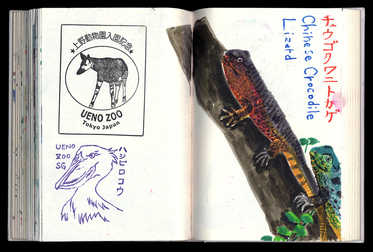 drawing at the zoo, lizard drawing