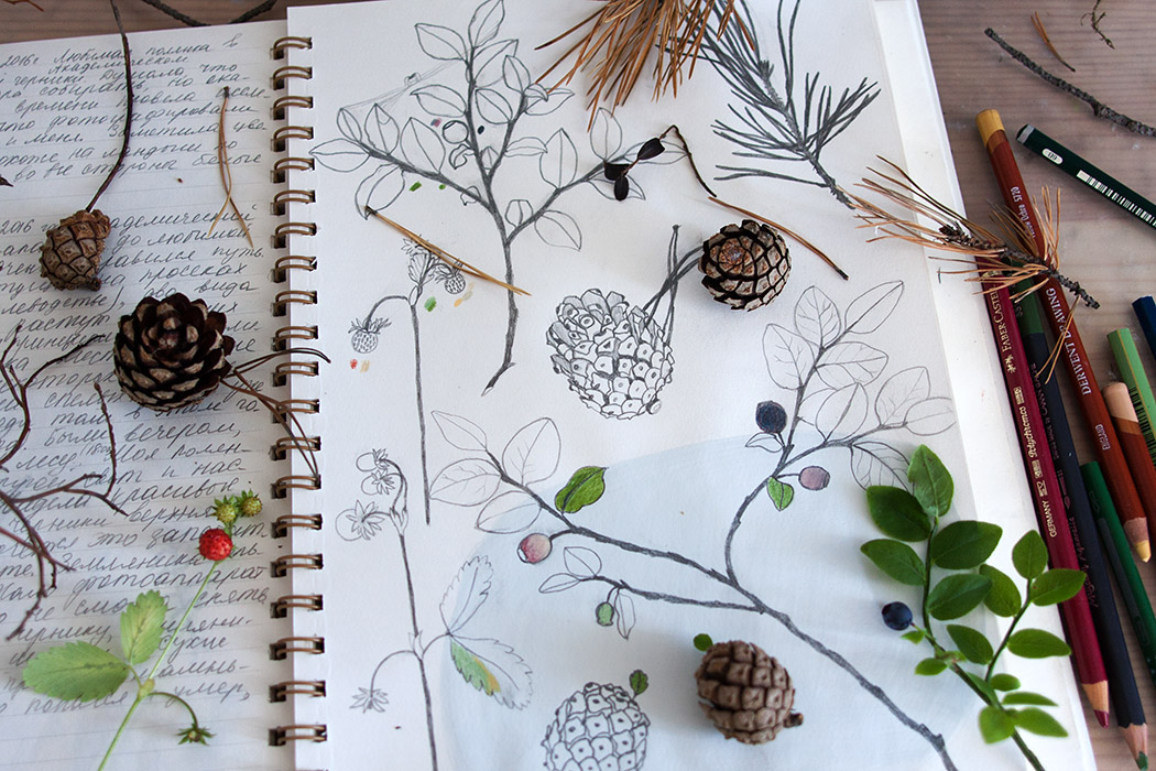 pinecone sketches, painting, nature, forest, journaling