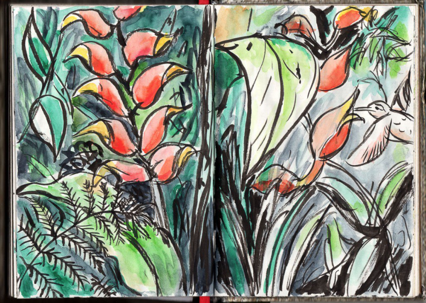 plants, colorful, markers, hummingbird