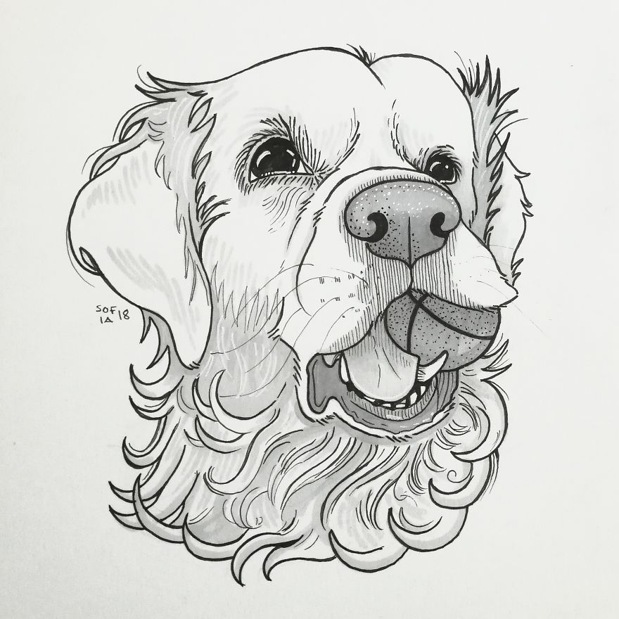 Drawing of a Golden Retriever