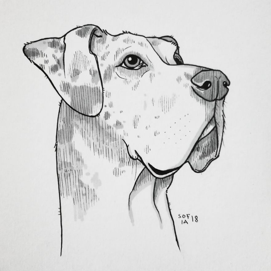 Great Dane Drawing