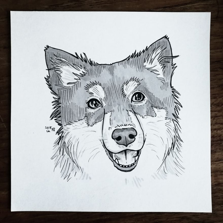 Drawing of a German Shepherd