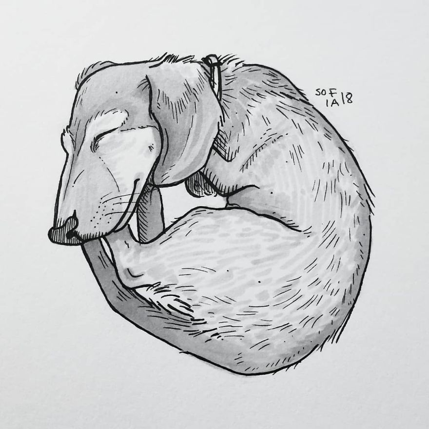 Tiniest Dachshund Drawing