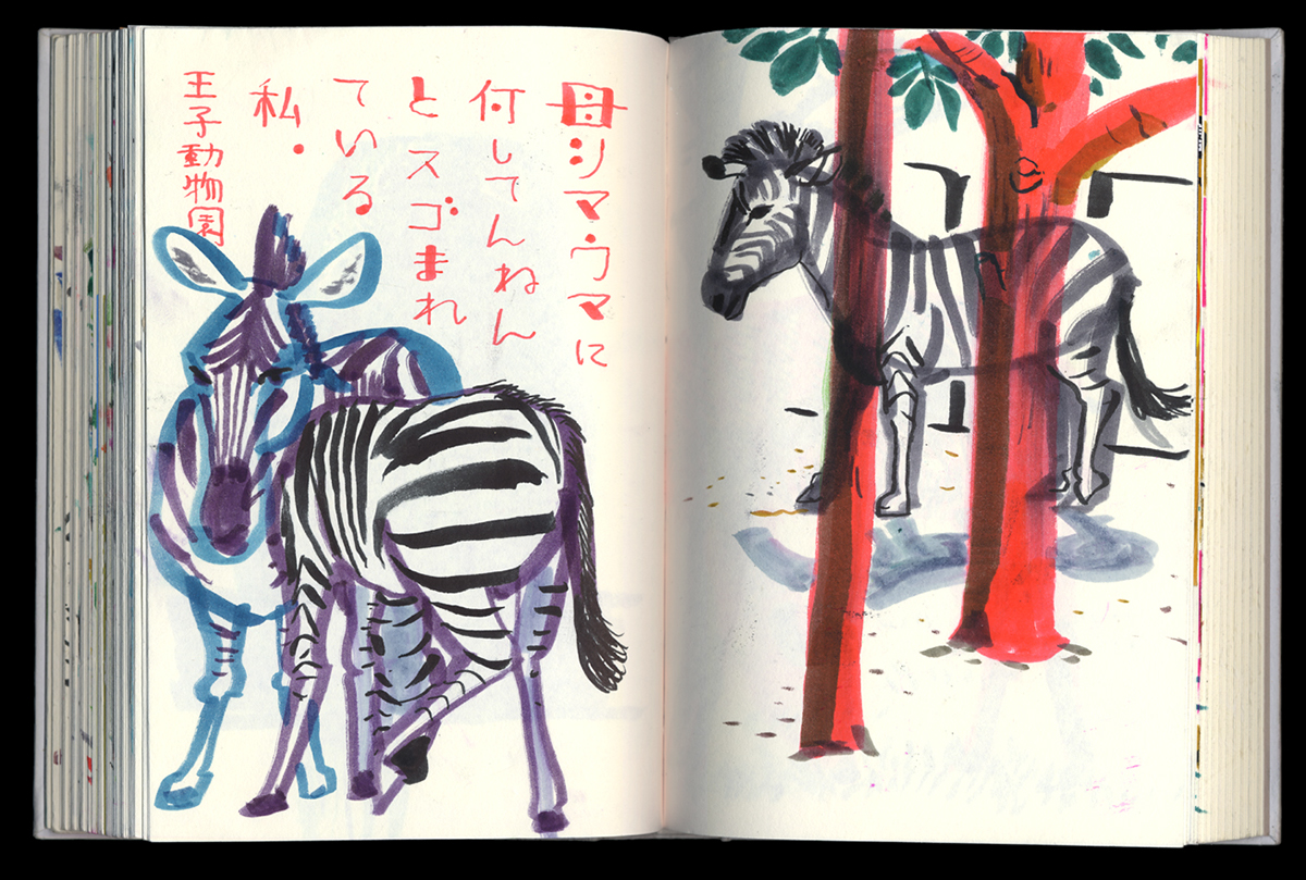 zebra sketching, zoo drawing