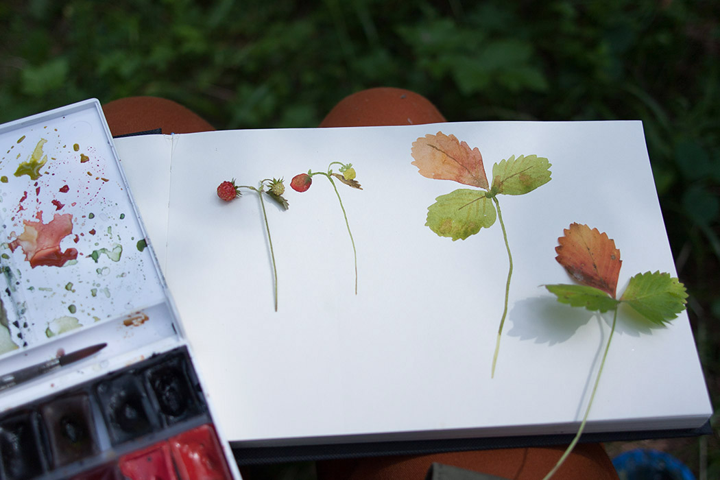observation painting, compare, strawberry, berries, watercolored