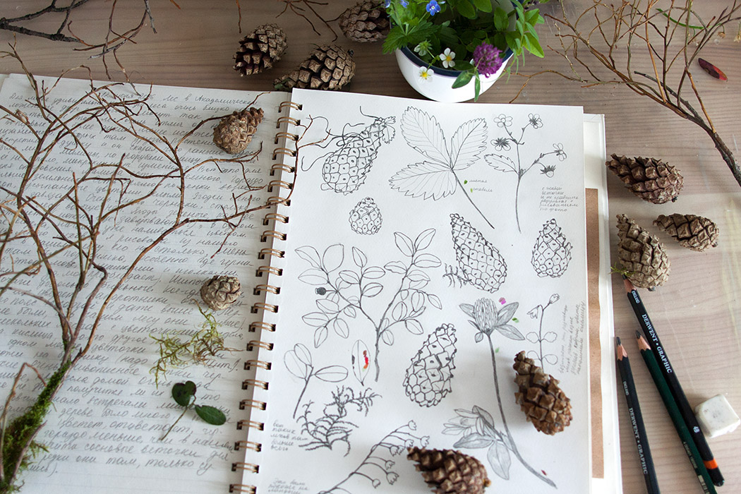 pinecones, twigs, copy, draw