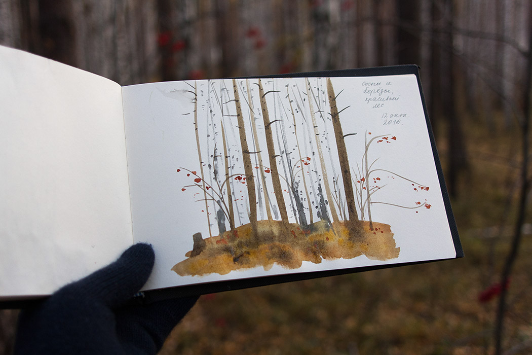 observation drawing, nature sketchbook