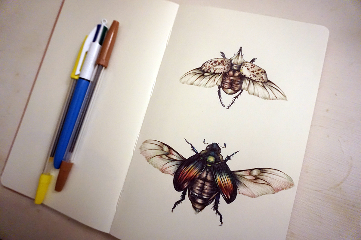 wings, bugs, insect drawing