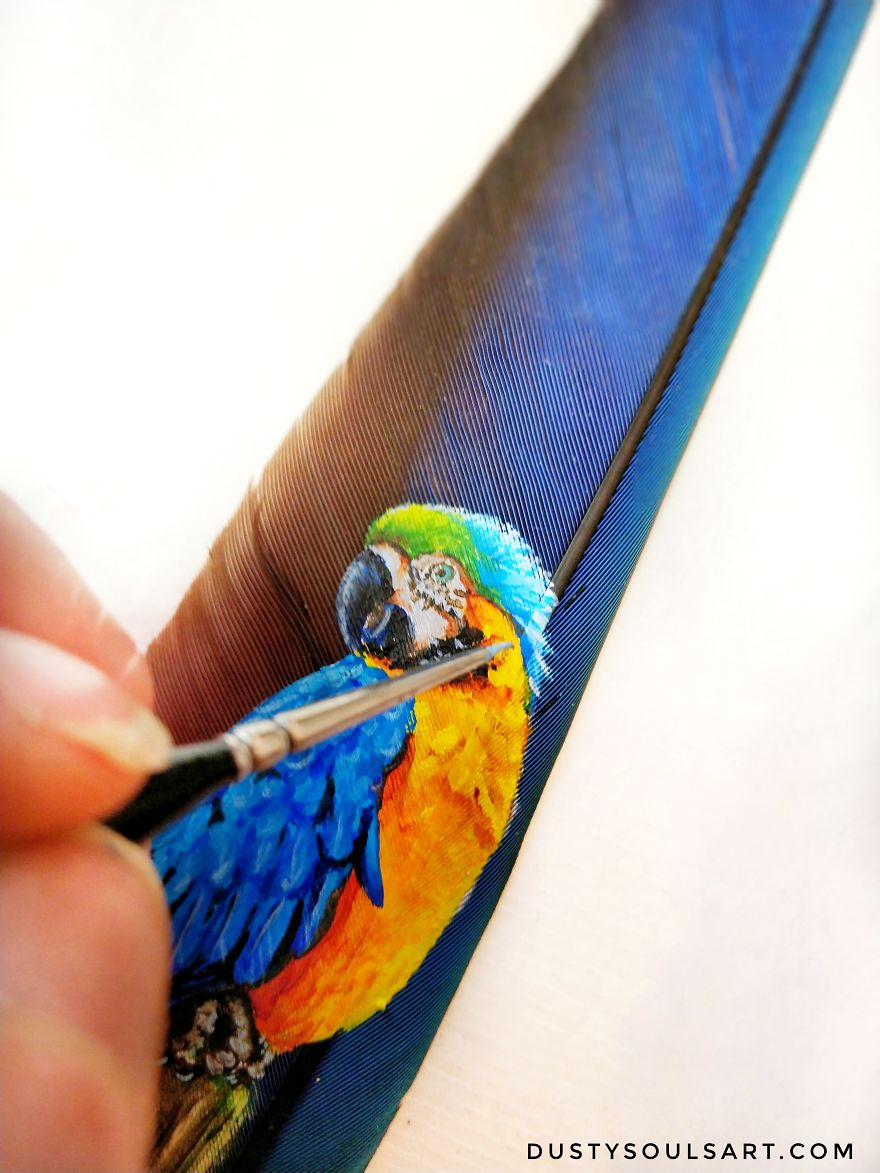 Parrot draw on a parrot feather