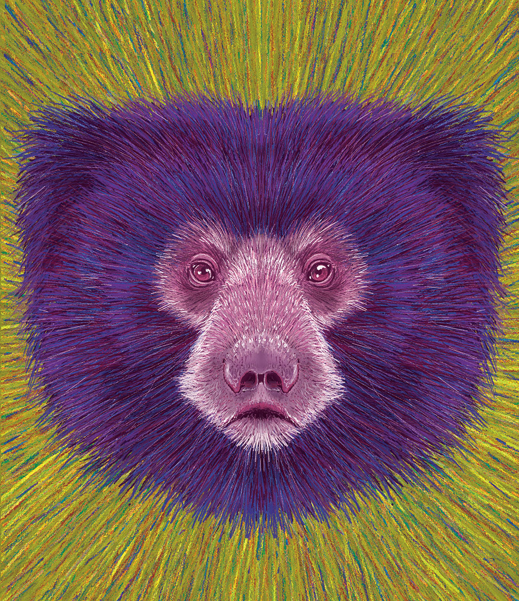 Sloth Bear Drawing