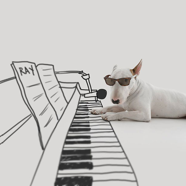 piano doodle with bull terrier dog