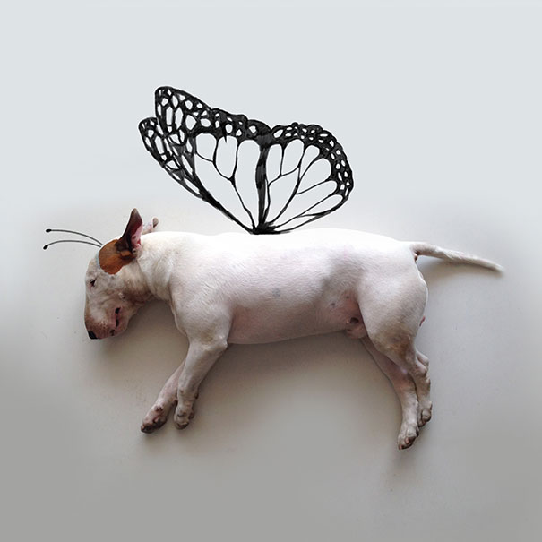 butterfly doodle with bull terrier dog