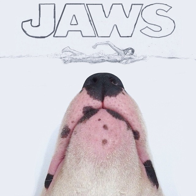 jaws doodle with bull terrier dog