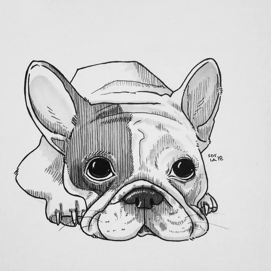 Drawings of Different Dog Breeds   Doodlers Anonymous
