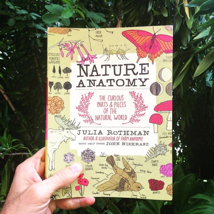 Giveaway: Nature Anatomy by Julia Rothman | Doodlers Anonymous