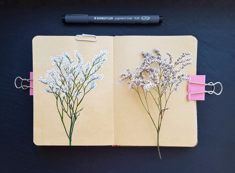 Side-By-Side Botanical Sketches | Doodlers Anonymous